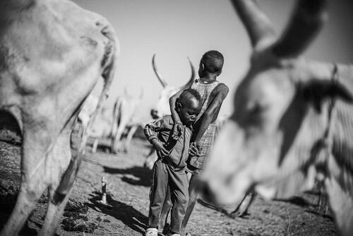 Two young boys working with their family's cattle