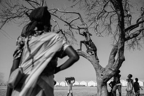 Young children playing in a tree at the camp