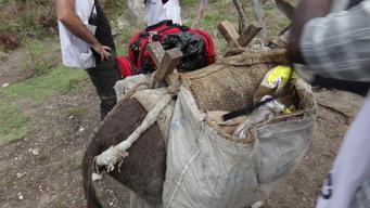 Haiti: Donkey Mobile Clinics | Web Clip | INTERNATIONAL